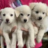 『【犬】子犬3頭の里親募集を開始いたしました』の画像
