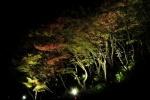 やっぱり幻想的だった!~私市植物園の『紅葉ライトアップ』に行ってみた~