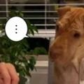 イヌの隣でお父さんが「食事」をしていた。じ~・・・ → 犬はこうした…