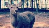 【なぞなぞ】鹿がアメリカに行きましたさてどこの州に行ったでしょう?