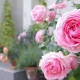 『玄関アプローチにバラを飾って、家族や訪問者をお出迎え!』の画像