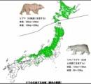 """【北海道】""""106年ぶり"""" 利尻島に設置のカメラに""""ヒグマ""""の姿確認"""