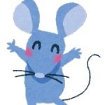 【閲覧注意】巨大ネズミが大発生! ニワトリを食い、病気を蔓延させ…