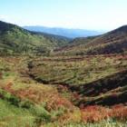 『志賀高原の紅葉』の画像