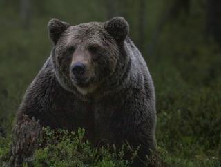 【襲われる動画あり】札幌で熊出没、自衛隊駐屯地を襲撃→憲法9条の精神で熊を撃退できず自衛官重傷…代わりに猟友会が駆除