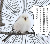 【乃木坂46】シマエナガが賀喜ちゃんへ「ありがとおおおおおお」wwまさかのお礼ww