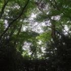 『自然に包まれる滄浪泉園』の画像
