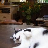 『働く猫ちゃん』の画像