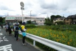 私部保育園の近くの畑で「ヒマワリ」めっちゃ咲いてる!