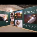 『ねこ・ネコ・スター猫の晩餐会・写真展!!』の画像