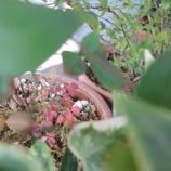 『ささやかに 秋』の画像