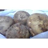『甘いジャガイモ』の画像