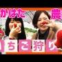 【なかはた農園】熊本でいちご狩り!ここでしか食べられない苺が絶品