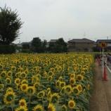 『ひまわり畑』の画像