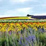 『【北海道ひとり旅】上川の旅『かんのファーム』早朝5時と朝9時の花畑』の画像