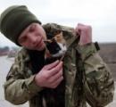 イヌとネコ 前線挟み兵士らの「最良の友」 ウクライナ東部紛争