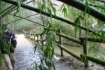 竹のトンネル内と、天野川のセグロセキレイ【Photo by 草ちゃん】