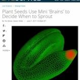 『植物の種子にある脳』の画像