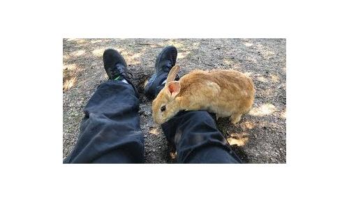 広島の「ウサギだらけの楽園」大久野島、素晴らしい映像に海外ユーザー激萌え