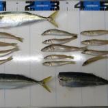 『周防大島で遊ぶ!周防大島のシロギス釣り #004』の画像