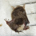 『白蝙蝠を探して』の画像