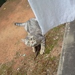 【画像】ワイ猫、スズメを捕まえ飼い主に自慢する