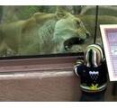 ガラス越しのライオンが怖い!