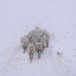 『羊たち』の画像