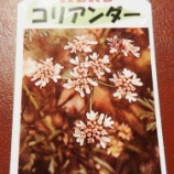 『植物との対話(2)』の画像
