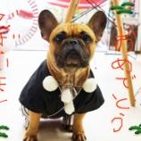 『フレンチブルドック アグー 新年のご挨拶』の画像