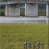 『雨また雨』の画像