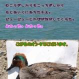 『【スナイパになる為にその七】鵜の大群に遭遇!!』の画像