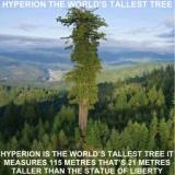 【画像】世界最大のヤバすぎる木がこちらwwwwwww