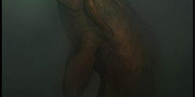 巨大生物の画像ください!!
