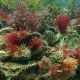 『オーストラリアの貝礁壊滅』の画像