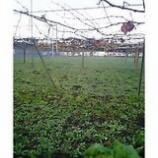 『初冬の葡萄畑』の画像