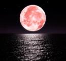 見逃し厳禁 ピンク色の満月「ストロベリームーン」が今夜登場