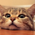 ネコが人間相手にだけ「ニャー」と鳴く理由が判明!その理由が可愛すぎるwwwww