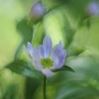 『五月晴れ』の画像