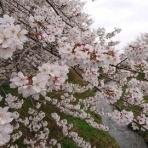 ・・神崎けんじ・けんけん散歩 ・・・神崎音楽事務所ブログ