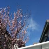 『春を感じた日(^_^)』の画像
