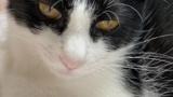 猫を飼う前のワイ「猫とか犬より愛嬌ないゴミだろ」猫を飼ったワイ「あ~猫ちゃんただいま~」チュチュ(※画像あり)