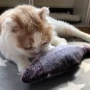 忙しい時に猫の相手をしてくれるおもちゃ