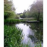 『雲場池2』の画像