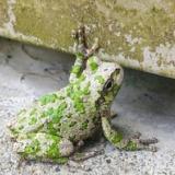 【画像】動物の『擬態』がガチでヤバい、どこに隠れてるかわかるか?wwwwwwwww