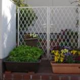 『我が家の庭の花;東大和市』の画像