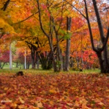 『夕暮れと紅葉Dusk and autumn leaves』の画像