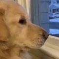1匹のイヌが窓の外を眺めていた。寒い日はこうしてあったまる♪ → もう1匹はこんな感じ…