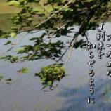 『青田に鳴く蛙』の画像