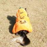 『Halloween☆』の画像